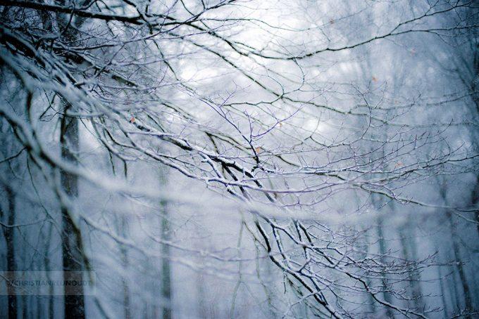 De Kleur Van Sneeuw In Arnhems Bos