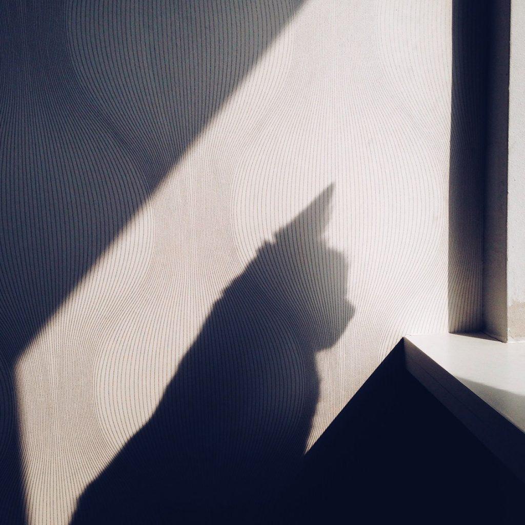Schaduw van een poes bij het open raam