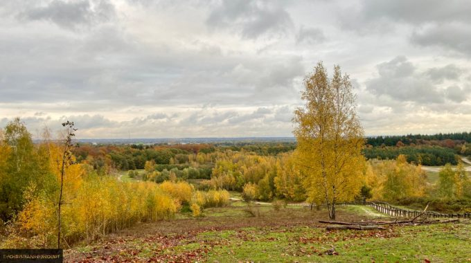 Natuurgebied Kwintelooijen